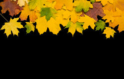 Autumn leafs against black background. With clipping path Stock Photo