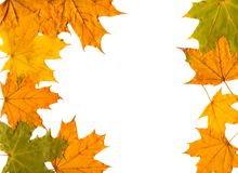 Autumn  leafs as  background Stock Photography