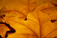 Autumn Leafs Background Stock Images