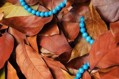 Autumn leafs background with blue necklace. Blue necklace and autumn leafs on the ground Royalty Free Stock Image