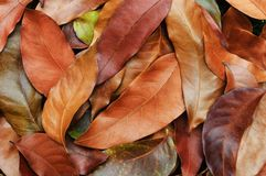 Autumn leafs background. Orange and brown autumn leafs on the ground Stock Image