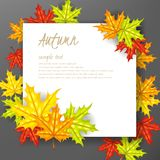 Autumn leafs background with paper sign Stock Photos