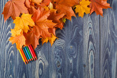 Autumn leafs on a blue wooden table. Autumn leafs and color pencils on a blue wooden table Stock Image