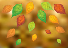 Autumn leafs on blurry background. Color autumn leaves on bright background stock illustration