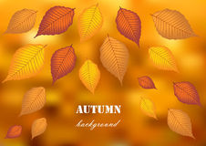 Autumn leafs on blurry background. Color autumn leaves on bright background vector illustration