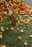 Autumn leafs broom Royalty Free Stock Photo