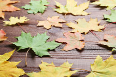 Autumn leafs Stock Image