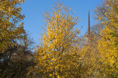 Autumn leafs. And a clear blue sky Royalty Free Stock Images