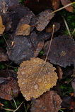 Autumn leafs close up. Stock Photo