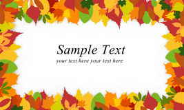 Autumn leafs. Colorful autumn leafs arranging frame Royalty Free Stock Images