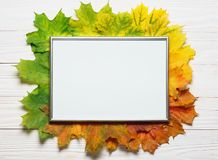 Autumn leafs colorful gradient composition with picture frame copy space stock photo