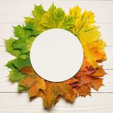 Autumn leafs colorful gradient composition with round frame copy space stock images
