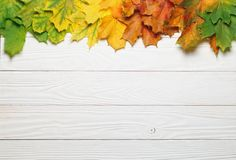 Autumn leafs colorful gradient composition with white wood copy space stock photos