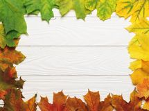Autumn leafs colorful rainbow gradient on white wood royalty free stock photos