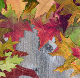 Autumn leafs displaying their colors on rustic wooden boards Royalty Free Stock Photography