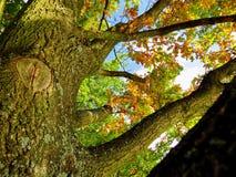 Autumn Leafs en árbol Imagen de archivo libre de regalías