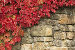 Autumn Leafs en la pared de Sotones Fotografía de archivo libre de regalías