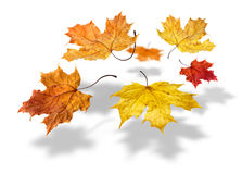 Autumn Leafs Falling Stock Photography
