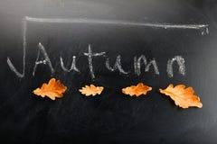 Autumn leafs black chalkboard background studio royalty free stock photos