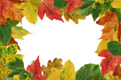 Autumn leafs frame royalty free stock photo