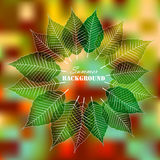 Autumn leafs frame on blurry background. Color autumn leaves on bright background stock illustration