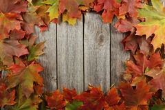 Autumn leafs frame on grey wooden background. Stock Photo