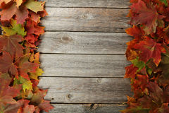 Autumn leafs frame on grey wooden background. Stock Image