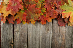 Autumn leafs frame on grey wooden background. Stock Photos