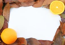 Autumn leafs frame. The frame made from autumn leafs and oranges Royalty Free Stock Photography
