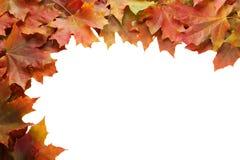 Autumn leafs frame on white background. Royalty Free Stock Photo