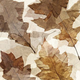 Autumn leafs grunge background Stock Photos