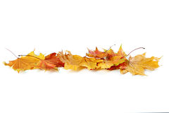 Autumn leafs. Isolated on a white stock image