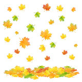 Autumn leafs isolated Royalty Free Stock Photography
