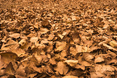 Autumn Leafs Stock Photos