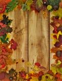 Autumn Leafs och avkastning Royaltyfri Foto
