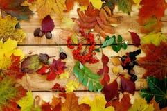 Autumn Leafs och avkastning Fotografering för Bildbyråer