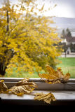Autumn leafs. On old window. Blurred background Stock Image