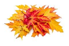 Autumn leafs. Over white background Stock Photo