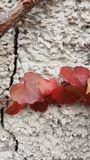 Autumn leafs Stock Photo