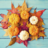 Autumn leafs and pumpkins Stock Images