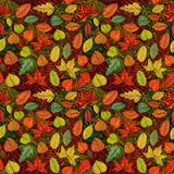 Autumn leafs seamless pattern Royalty Free Stock Images
