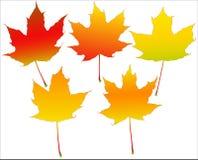 Autumn leafs set Stock Photography