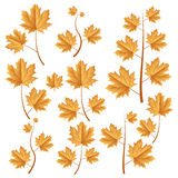 Autumn leafs set Royalty Free Stock Images