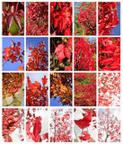 Autumn leafs set Stock Images
