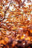 Autumn leafs. Shot in a quiet afternoon just about when sun was about to set Royalty Free Stock Images