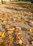 Autumn leafs on sidewalk Stock Image