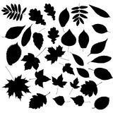 Autumn Leafs Silhouettes Royalty Free Stock Photo