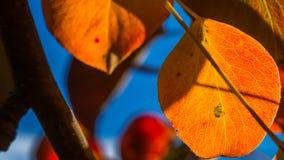 Autumn leafs 2 Royalty Free Stock Photos