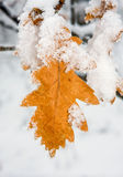 Autumn leafs under snow Stock Photo