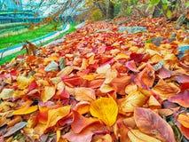 Autumn Leafs unter dem Baum, Suyeong-Fluss, Busan, Südkorea stockfotografie